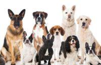 Acidente causado por cães do empregador pode configurar culpa da vítima
