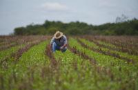 RS amplia prazos para produtor rural adotar Nota Fiscal Eletrônica